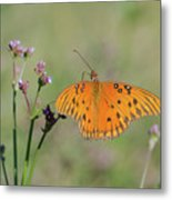 What's Up Here Metal Print