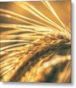 Wheat Ear Metal Print