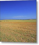 Wheat Field After Harvest Metal Print