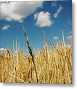 Wheat On The Rhine Metal Print