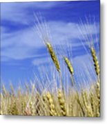 Wheat Trio Metal Print