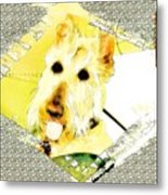 Wheaten Scottish Terrier - During Sickness And Health Metal Print