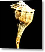 Whelk Sea Shell Metal Print