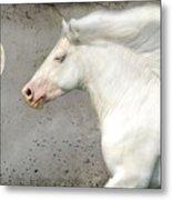 When Horses Dream Metal Print