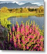 When The Rains Come In The Desert So Do The Blooms Metal Print