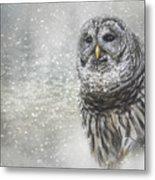 When Winter Calls Owl Art Metal Print