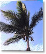 Where Coconuts Come From Metal Print