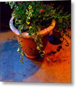 Where Flowers Never Hide Metal Print by Guy Ricketts