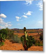 Where The Cactus Grow Metal Print