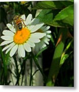 Where The Daisies Are Metal Print
