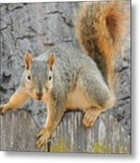 Where's The Nuts? Metal Print