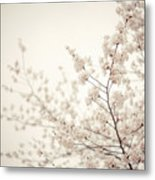 Whisper - Spring Blossoms - Central Park Metal Print