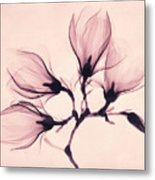 Whisper Magnolia Metal Print