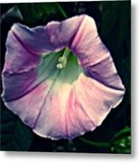 Whispered Glory Metal Print