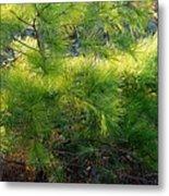 Whispering Pines Metal Print