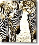 Whispering Zebras Metal Print