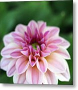 Whispers From The Garden Metal Print