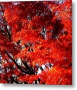Whispers Of A Japanese Maple Metal Print
