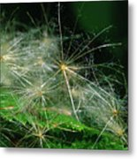Whispy Seeds Metal Print