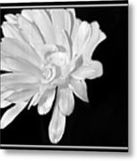White And Black Flower Painting Metal Print