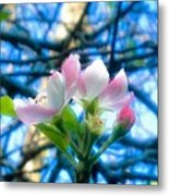 White And Pink Apple Blossoms Against A Blue Sky Metal Print