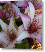 White And Pink Lilies Metal Print