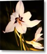 White And Purple Lily Metal Print