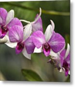 White And Purple Orchids Metal Print
