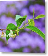 White And Purple Spring 2 Metal Print