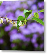 White And Purple Spring Metal Print