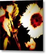 White And Red Dianthus Metal Print
