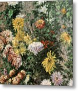 White And Yellow Chrysanthemums In The Garden At Petit Gennevilliers Metal Print