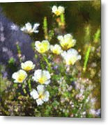 White And Yellow Poppies Abstract 2   Metal Print
