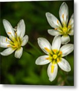 White And Yellow Wild Flowers Metal Print
