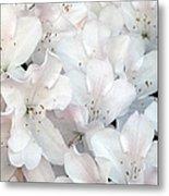 White Azaleas 1 Metal Print