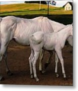 White Baby Horse Metal Print