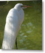 White Beauty Of The Marsh Metal Print