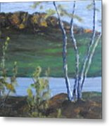 White Birch In The Landscape Metal Print