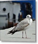 White Bird Port Burgas Metal Print