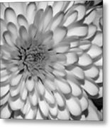 White Bloom Metal Print