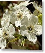 White Blossom  Metal Print