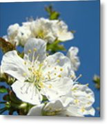 White Blossoms Art Prints Spring Tree Blossoms Canvas Baslee Troutman Metal Print