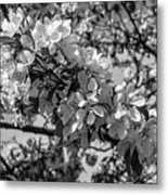 White Blossoms In Black And White Metal Print