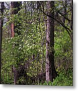 White Blossoms In The Woods Metal Print