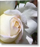 White Blush Rose Metal Print