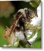 White Bumblebee Metal Print