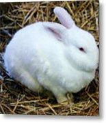 White Bunny Metal Print
