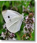 White Butterfly At The Good Earth Market Metal Print