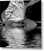 White Butterfly Bw Metal Print