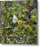 White Butterfly On Golden Daisy Metal Print